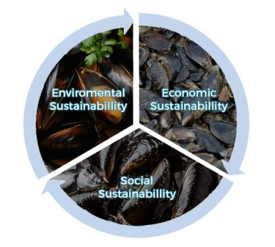 blue ocean mussels sustainability