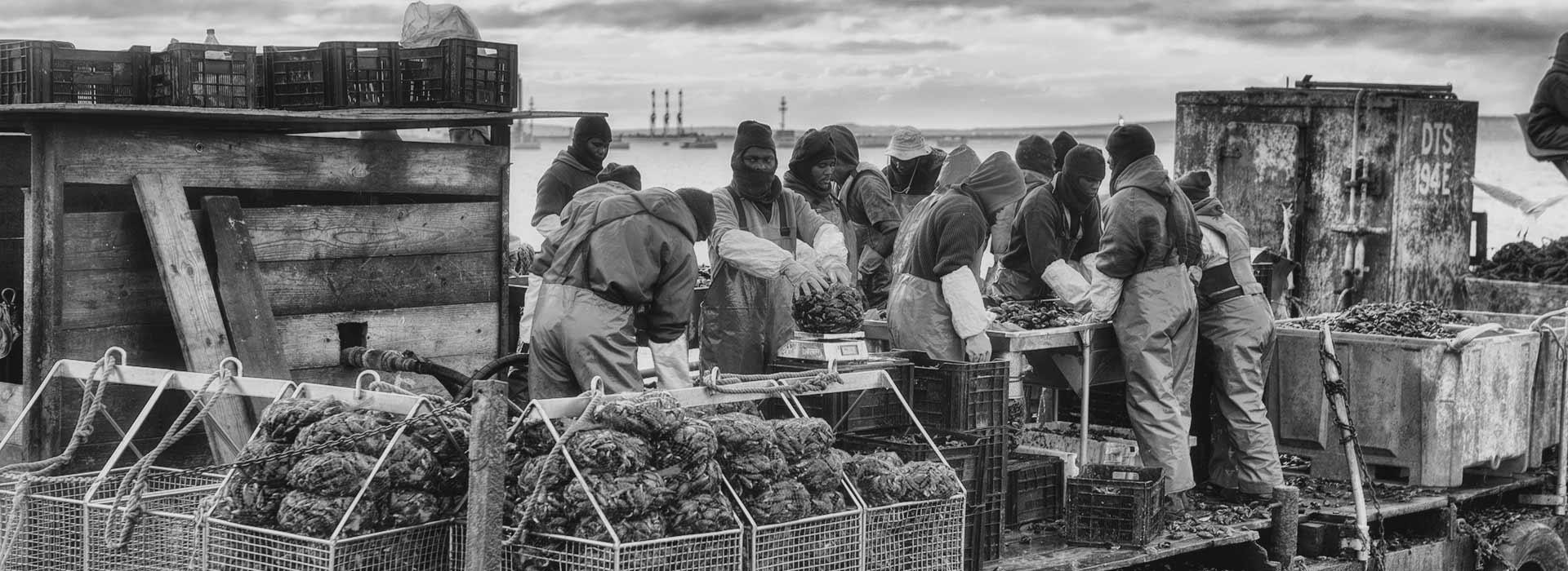 blue-ocean-mussels-workers-boat