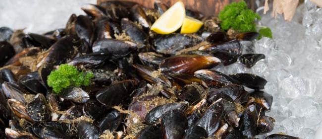 blue-ocean-mussels-frozen-mussels