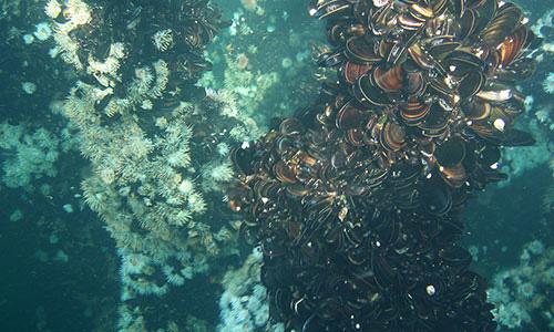 blue-ocean-mussels-mussels-ocean