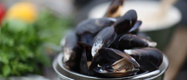 blue-ocean-mussels-mussels